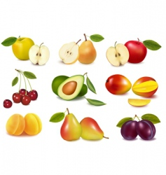 super group colored fruits vector image