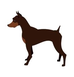 Doberman pincher dog vector image vector image