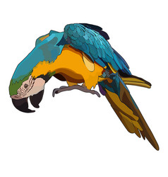 Colorful tropical parrot vector