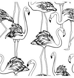 Exotic flamingos flamboyance group gathering vector