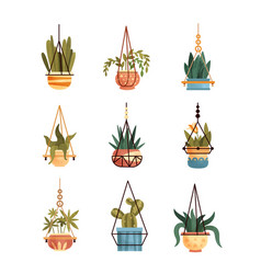 Green hanging indoor house plants set elements vector