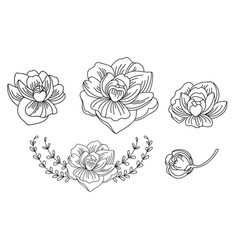 line art set peonies flowers vector image