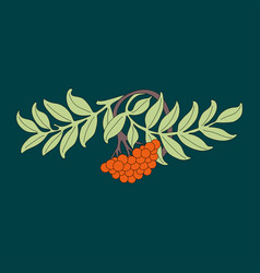 Rowanberry rowan branch with leaves and berries vector