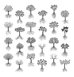 Set black trees with leafs and roots vector