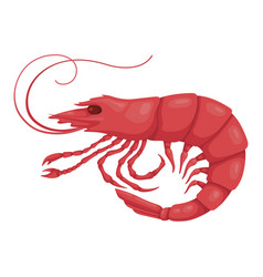 Shrimp pink icon boiled healthy seafood vector