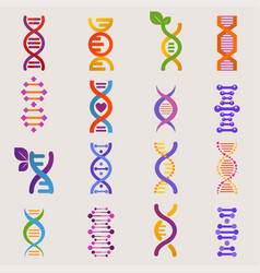 dna genetic sign with genome or gene in vector image