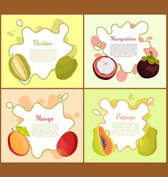 Durian and mangosteen mango vector