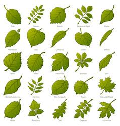 leaves of plants set vector image