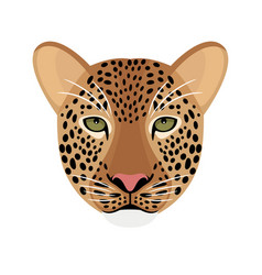 leopard head isolated on white vector image