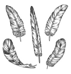 set bird feather sketch isolated wing pen vector image