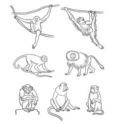Set different monkeys in contours vector