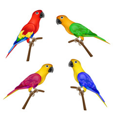 set of beautiful colorful parrots isolated on vector image
