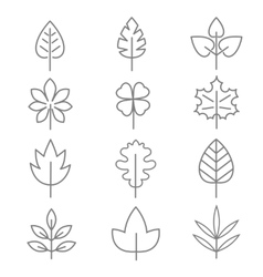 Leaf thin line icons vector image vector image
