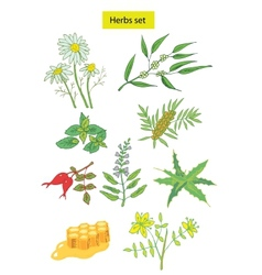herbs set detailed vector image vector image