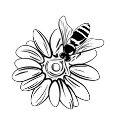 Bee on flower isolated on white vector