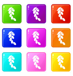 Branch of cornel or dogwood berries icons 9 set vector