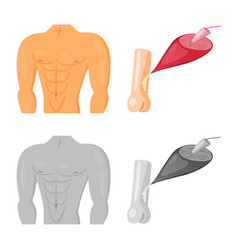 Design fiber and muscular icon set of vector