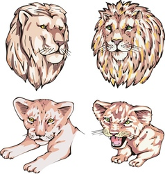 Heads of lions and lion cubs vector image
