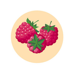 Raspberry red berries yellow circle vector