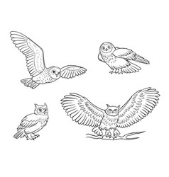 realistic owls in outlines vector image