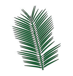 Tropical palm leave jungle leaf floral vector