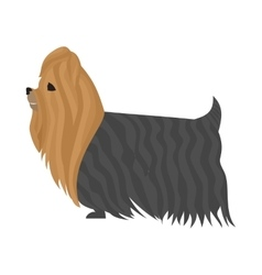 Dog yorkshire terrier vector
