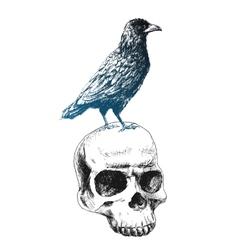 raven on the skull vector image