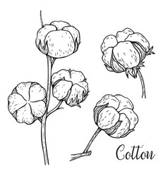 Hand drawn set of cotton branches cotton flower vector