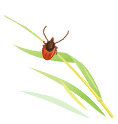 Mite in grass vector