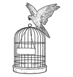 Parrot sits on a cage blank plate sketch scratch vector