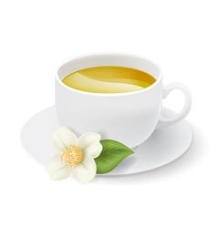 jasmine tea cup vector image