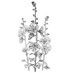 Hand Drawn Bindweed Flower Sketch vector