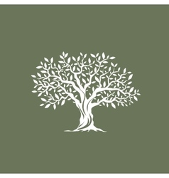 Olive tree silhouette on grey background vector