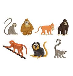 cartoon monkeys wildlife and zoo animals vector image