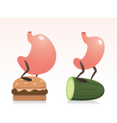 fat and slim stomachs and diet vector image