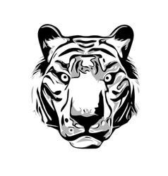 Head of Tiger vector image