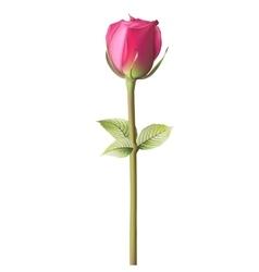Orange red Rose EPS 10 vector