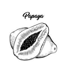 Papaya black and white vector