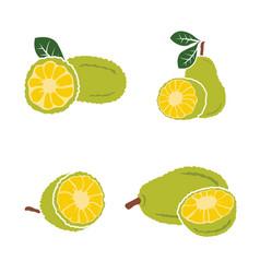 Black jackfruit set on white background vector