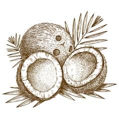 Engraving coconuts vector