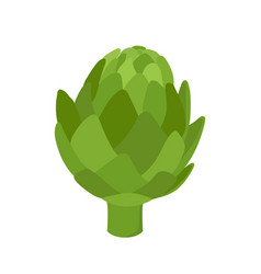 healthy artichoke organic farm product vector image