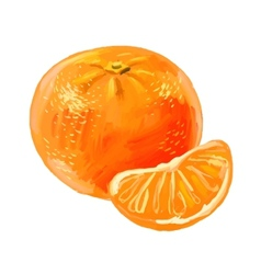 picture of mandarin vector image