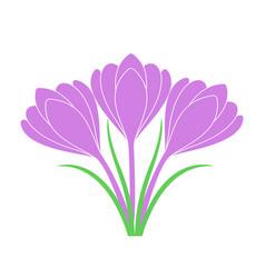 saffron flower vector image