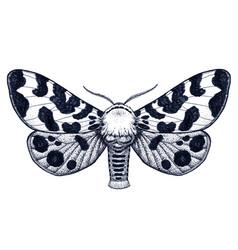 Tattoo spotty butterfly arctia caja americana vector