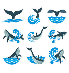 wild whale in sea waves and water splashes vector image vector image