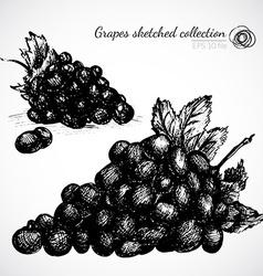 Grape hand drawn vector