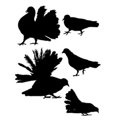 pigeon dove detail silhouette 02 vector image