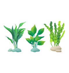 set or decorative aquarium algae oe seaweed poster vector image