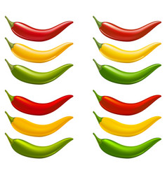 fresh chili vector image