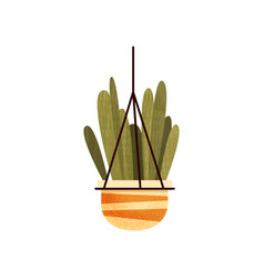 Green hanging potted cacti house plant elegant vector